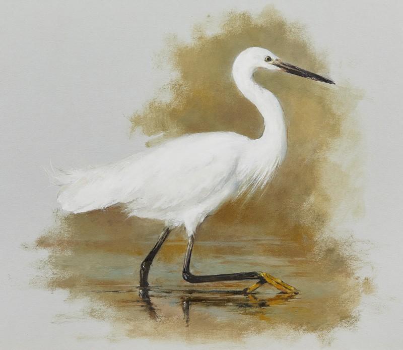 Mandy Shepherd , Cattle Egret