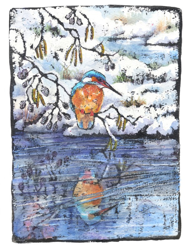 Emma Faull , Winter kingfisher