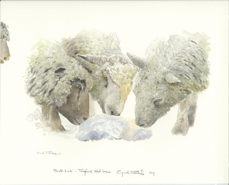 Gordon Rushmer , Salt lick, Treyford
