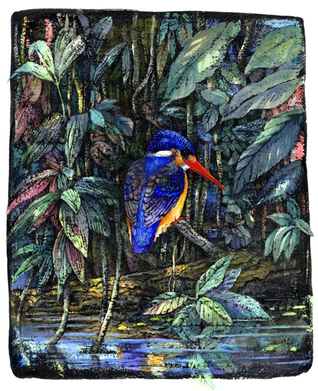Jungle Kingfisher