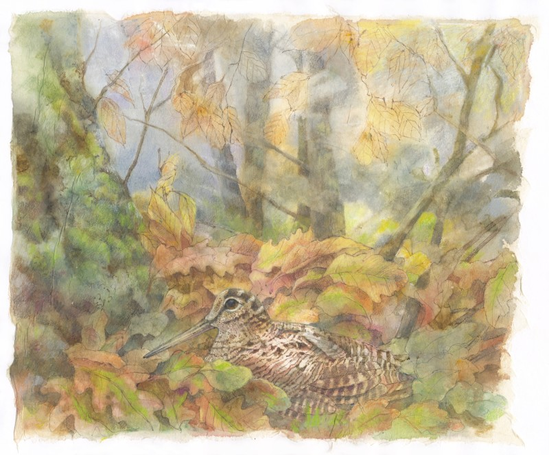 Emma Faull , Woodcock in leaves