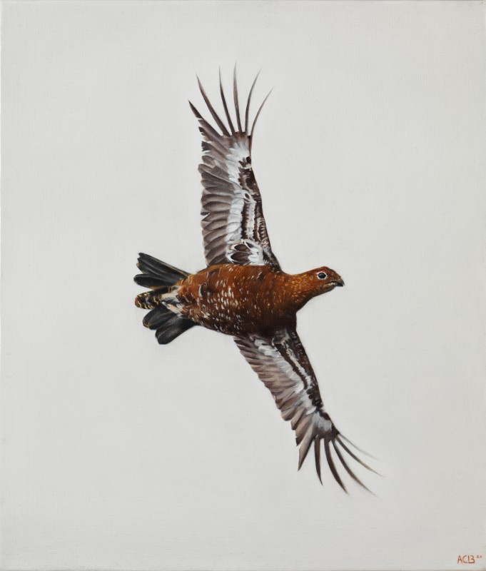 Anna Clare Lees-Buckley , Crossing Grouse study