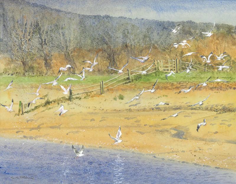 Wheeling Gulls, Litlington