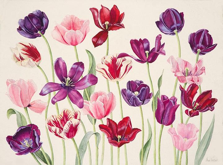 Ann Fraser , Just Tulips