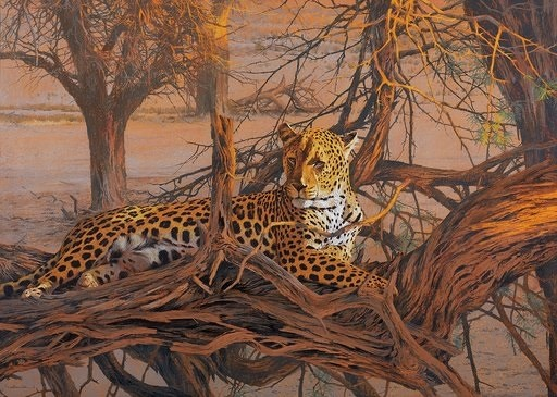 Leopard, Kalahari Sundown