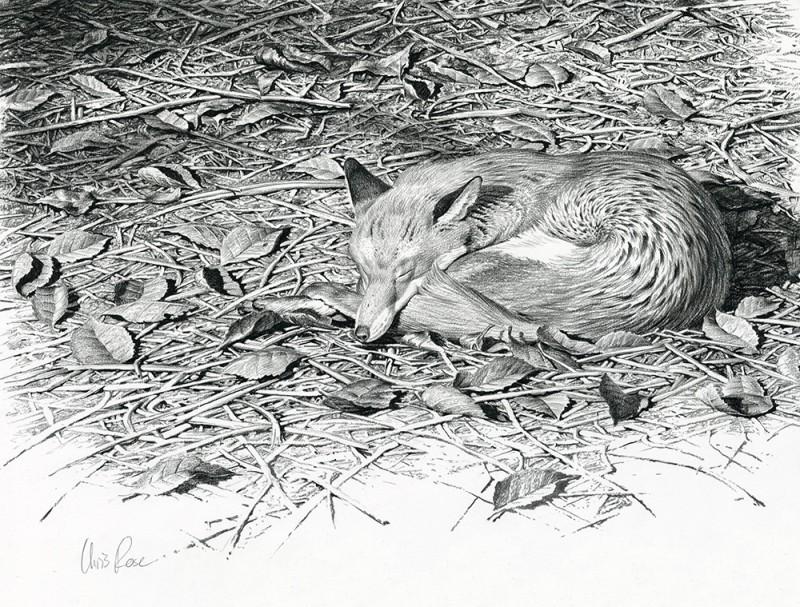 Chris Rose , Sleeping fox