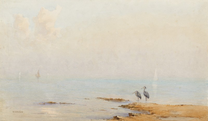 Grey herons on the shore