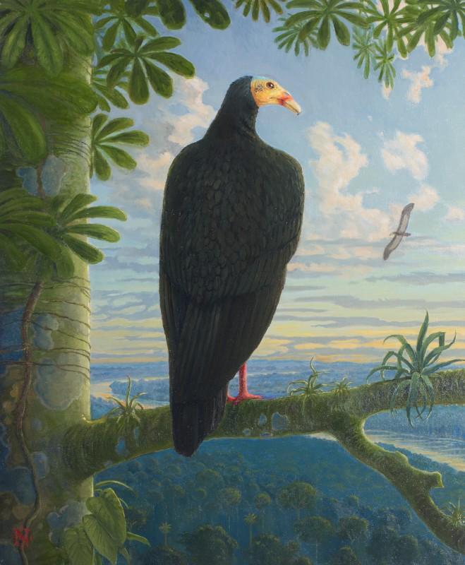 nigel hughes greater yellow headed vulture