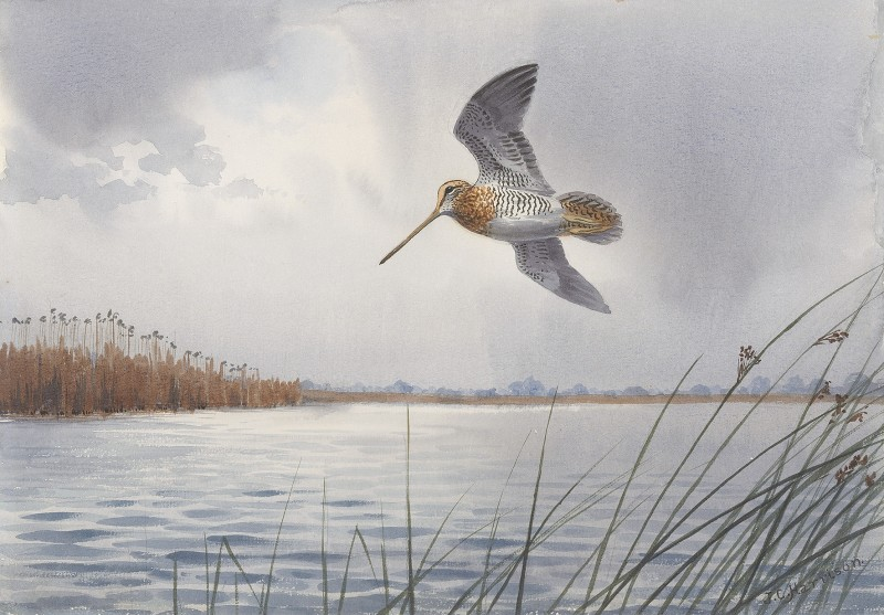 John Cyril Harrison , Flushed from the water's edge, Snipe