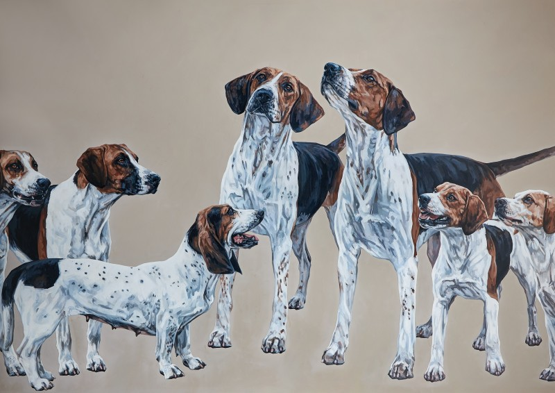 Bailys (4 shires basset, forest and district beagles, pendle forest harriers, Warwickshire foxhounds)