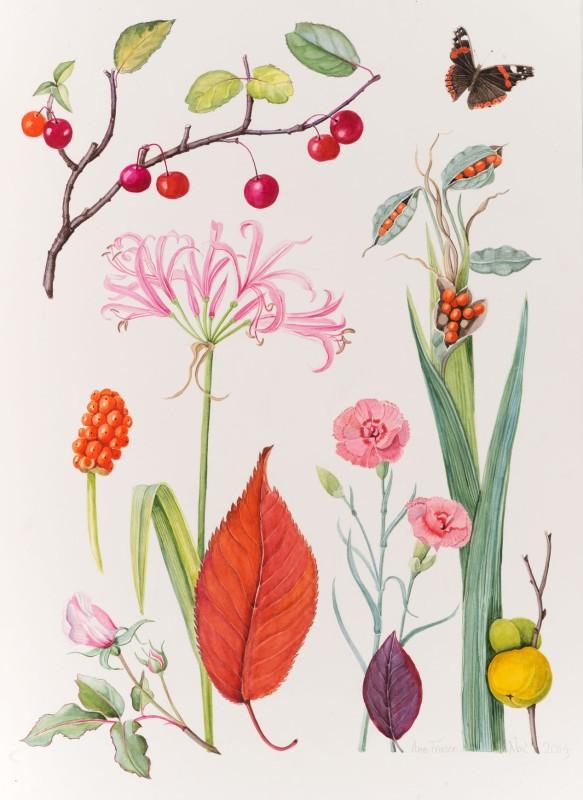 Ann Fraser , The November garden