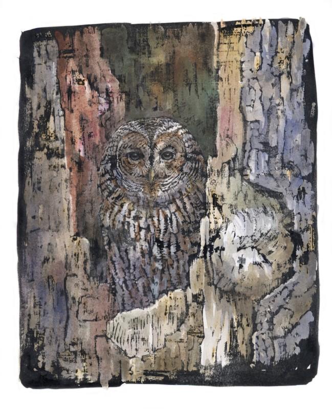 Emma Faull , Tawny Owl