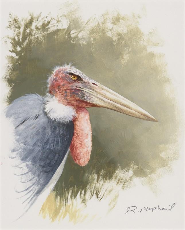 Rodger McPhail , Marabou Stork