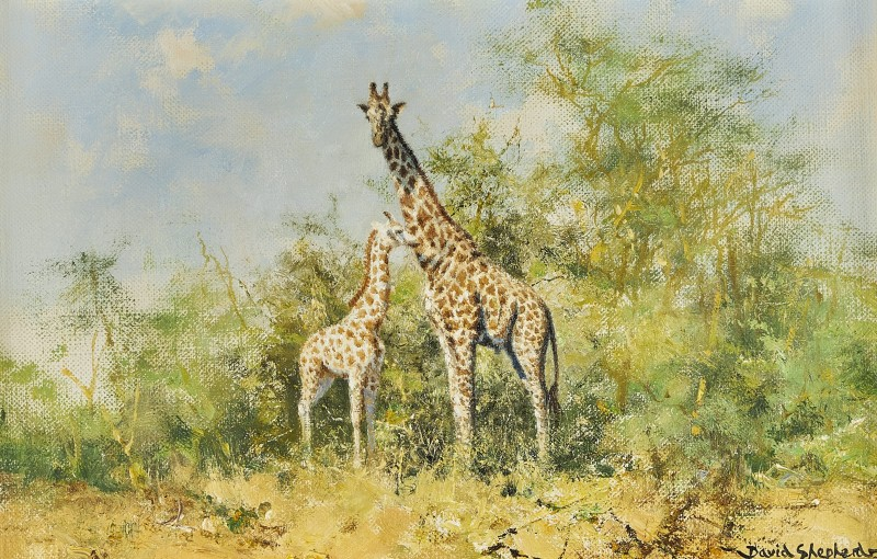 David Shepherd , Giraffe
