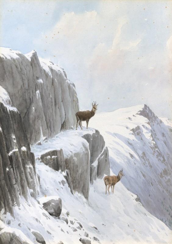 Chamois in a winter landscape