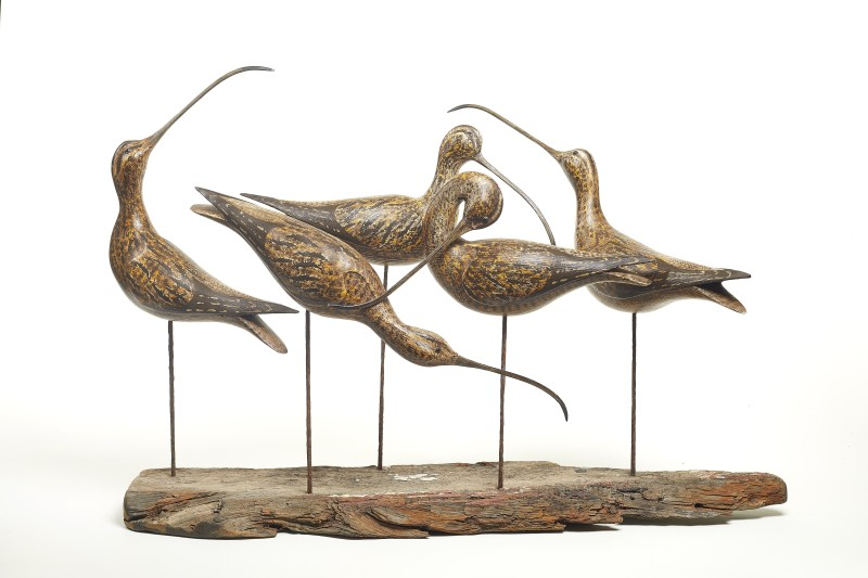 Five Whimbrel on Driftwood