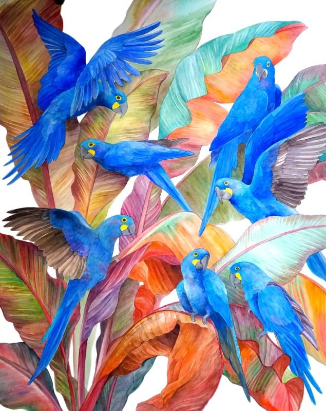 Emma Faull , Lear's Macaws