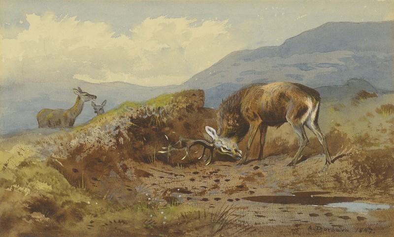 Archibald Thorburn , Stag