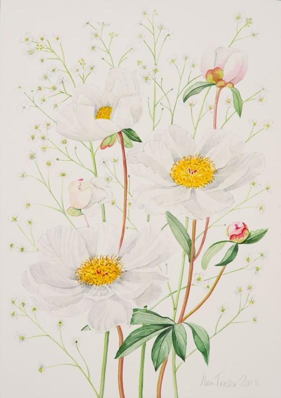 Ann Fraser , White Peonies
