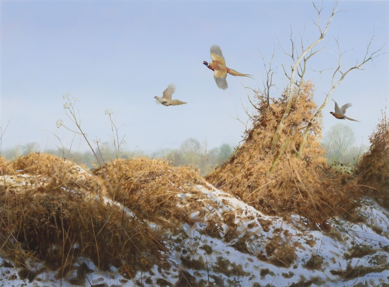 Rodger McPhail , Late season Pheasants