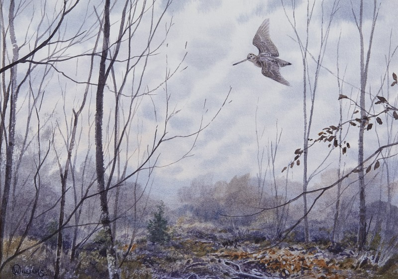 Owen Williams , Woodcock in silver birch