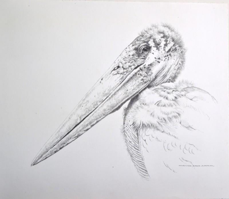 David Ord Kerr , Marabou Stork sketch