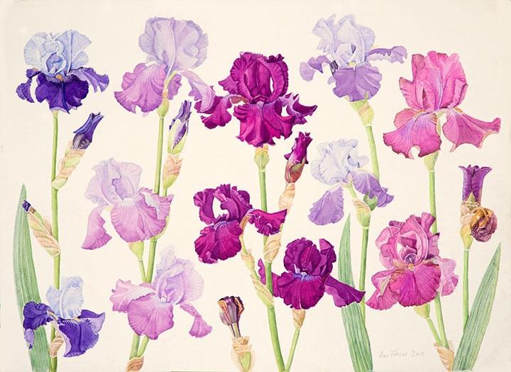 Ann Fraser , Blue & Purple Tall Beared Iris 2018