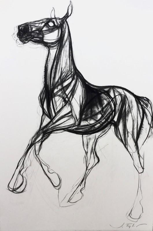 Jo Taylor , Storm horse