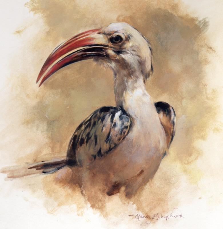 Mandy Shepherd , Red-Billed Hornbill