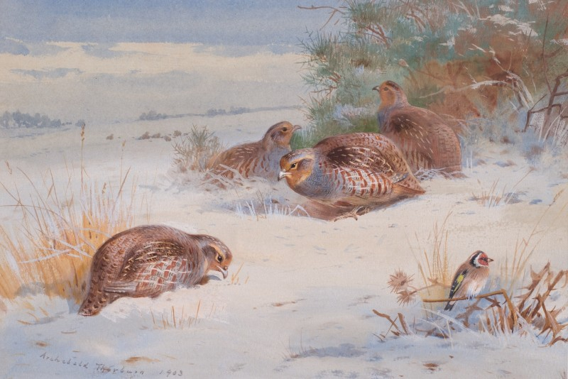 Archibald Thorburn , Partridge and Goldfinch in a winter landscape