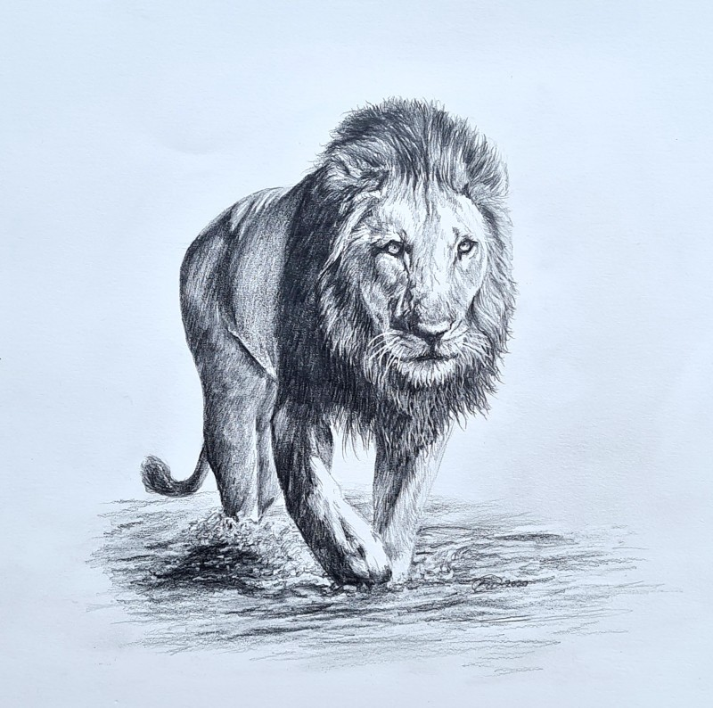 Testing the Water (Lion)