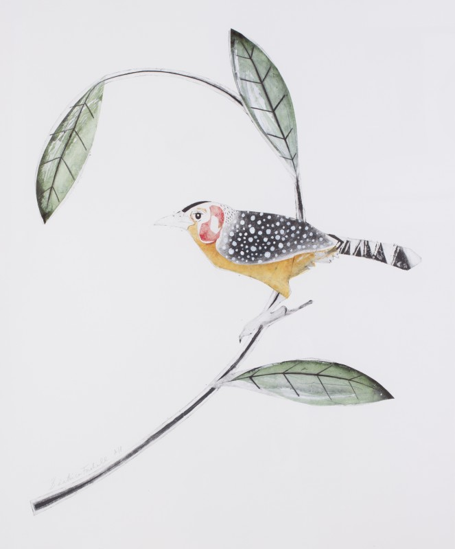 Beatrice Forshall , Red and yellow barbet