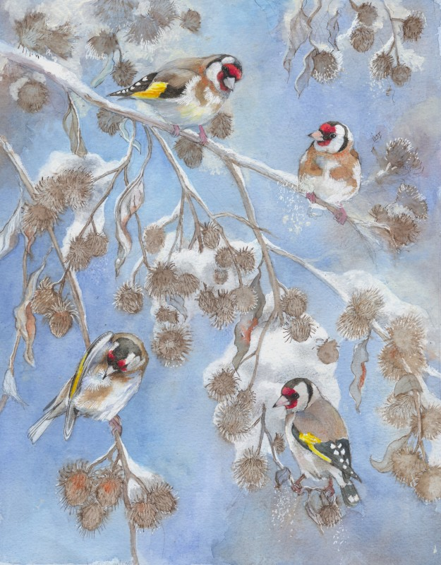 Emma Faull , Goldfinch on burrs