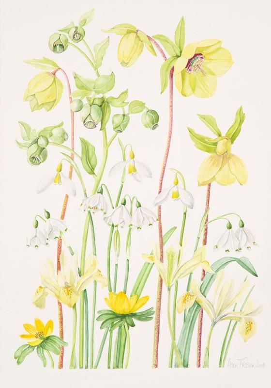 Ann Fraser , Yellow Spring