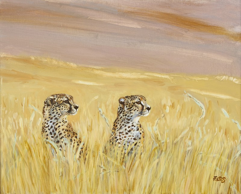 Cheetah brothers at Lewa Wildlife Conservancy