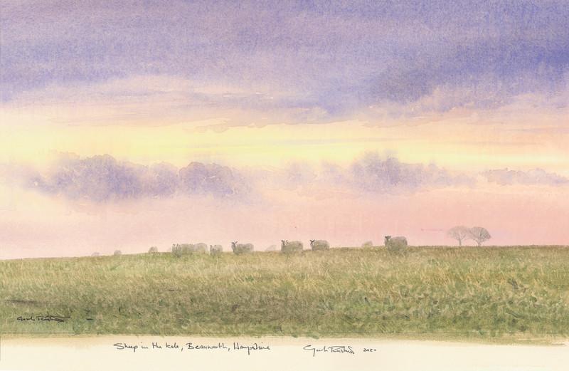 Gordon Rushmer , Sheep in the Kale, Beauworth