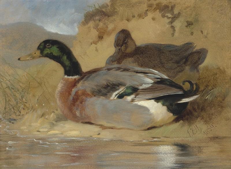 Ducks in a river landscape