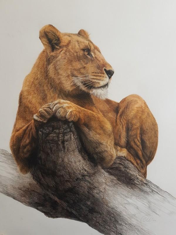 On Pause - Lioness