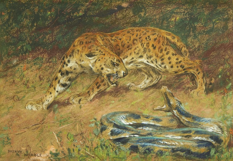 Arthur Wardle , R.I., R.B.C. , Leopard and snake
