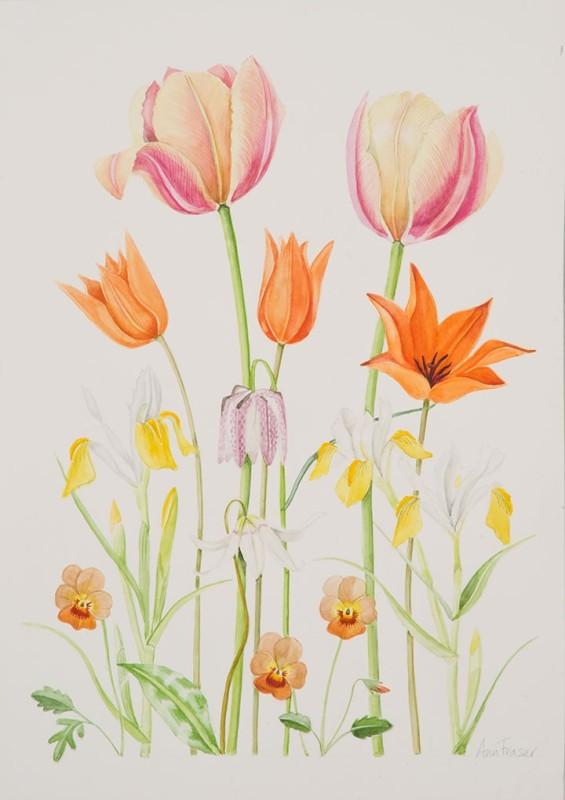 Ann Fraser , Orange Spring