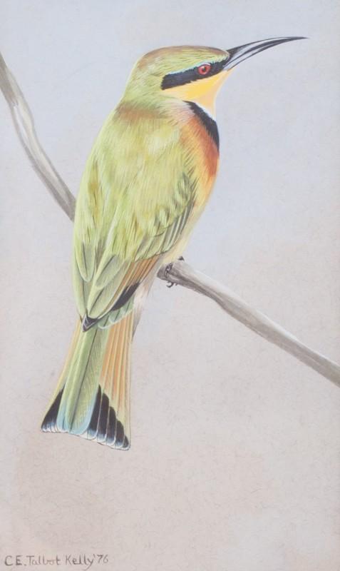 Chloë Talbot Kelly , Little African bee-eater