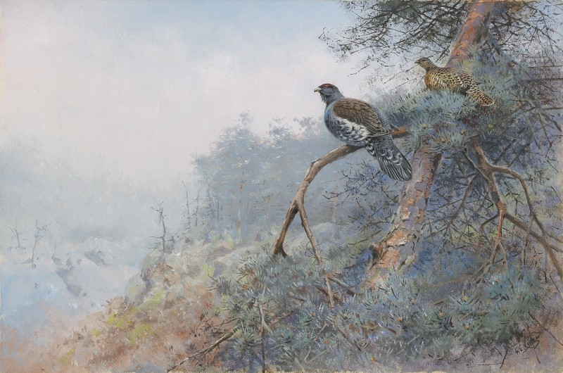 George Edward Lodge , Capercaillie