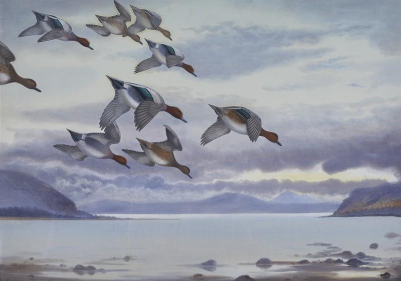Widgeon landing