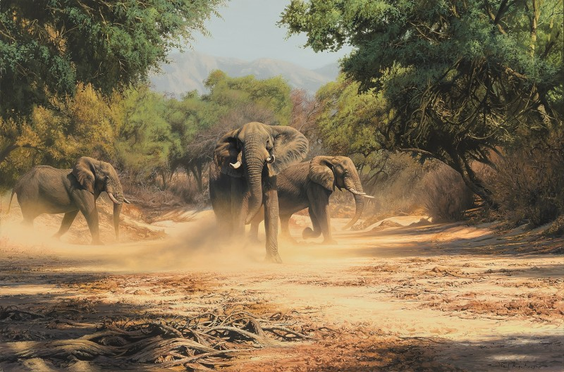 Paul Augustinus , Dusty Elephants, Sapi River