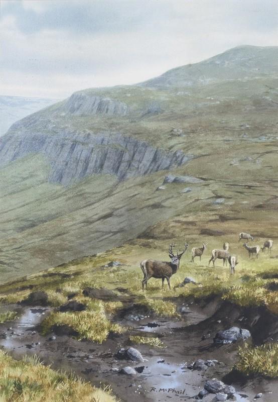 Deer on a highland hillside