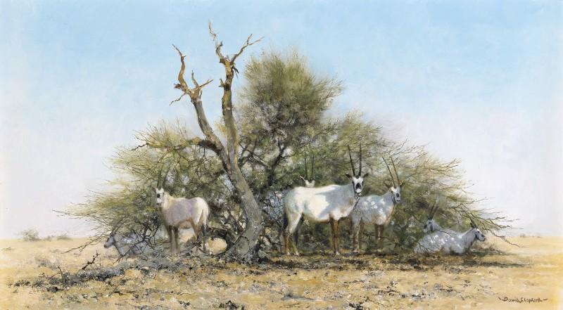David Shepherd , Arabian Oryx