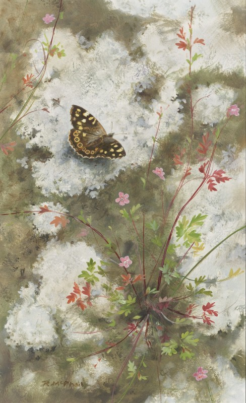 Rodger McPhail , Speckled Wood