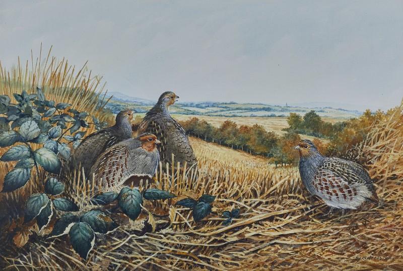 Berrisford Hill , Partridge in a stubble field