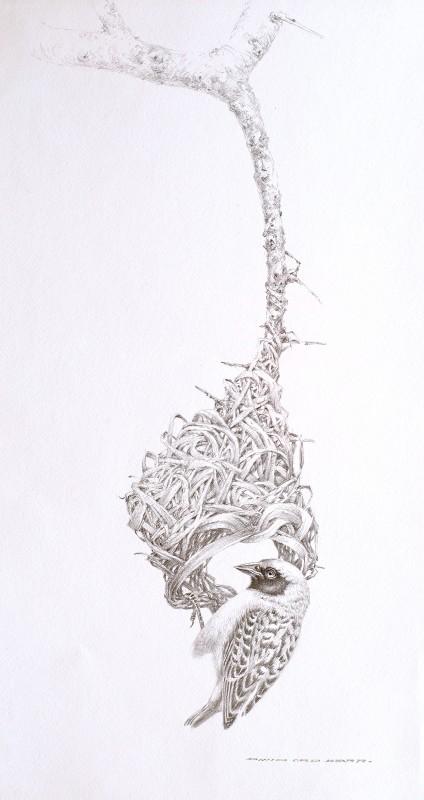David Ord Kerr , Weaver sketch
