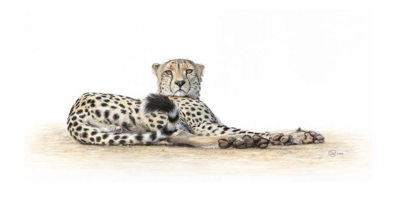 I dare you (Leopard)